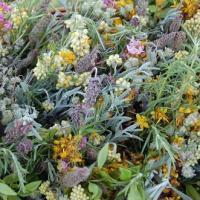 Jornadas Europeias do Património: Saberes e Sabores das Plantas - um património imaterial a preservar